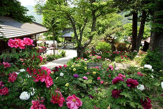 花盛りの伊那谷へ どうぞおでかけください!
