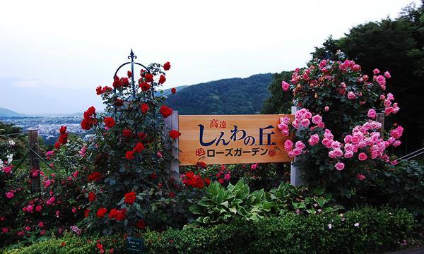 高遠「しんわの丘ローズガーデン」②【イベント情報】
