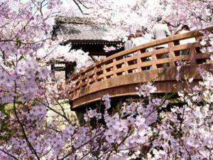 桜咲く高遠へ!