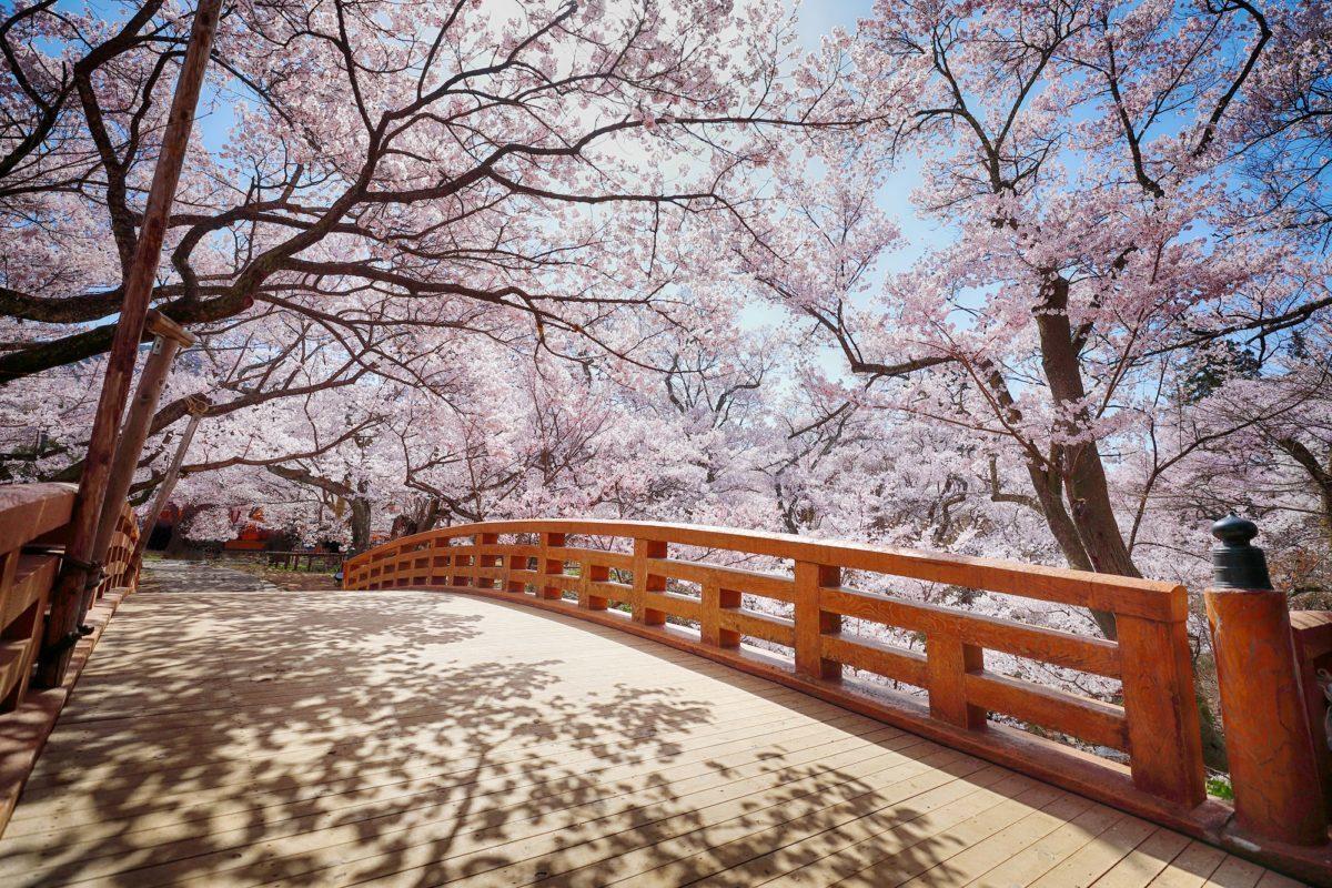 高遠城址 【桜🌸情報】