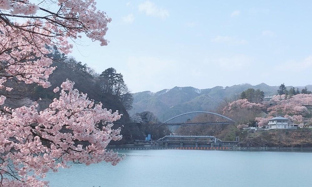 桜🌸開花状況⑦