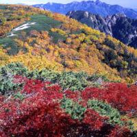 南アルプスの紅葉