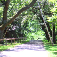 高遠城址公園(夏)